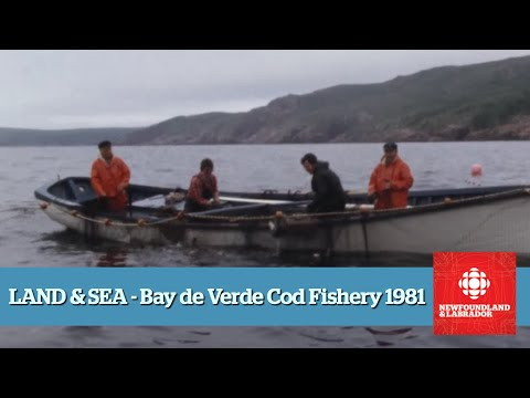Land & Sea - Bay de Verde Cod Fishery - Full Episode (1981)