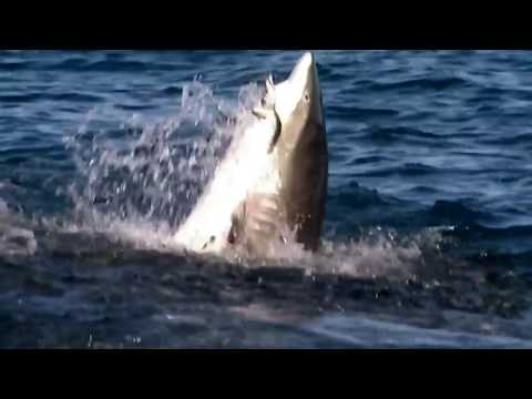Watch National Geographic Documentary: Feast of Predators |