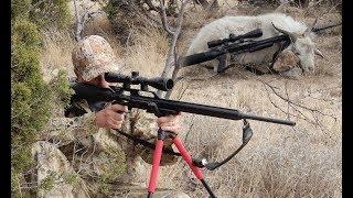 Airgun Hunt: Texan 308 Air Rifle on Feral Goat