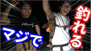 高級魚がめちゃめちゃ釣れる釣り方を見つけた!!