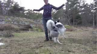 A Few Amazing Canine Freestyle Moves!