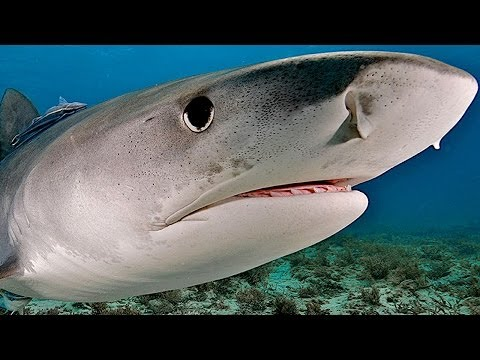 These Sharks Just Want To Hang Out With You