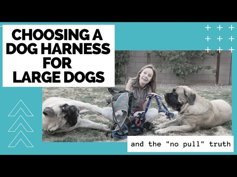 How To Choose A Dog Harness For Large Dogs [