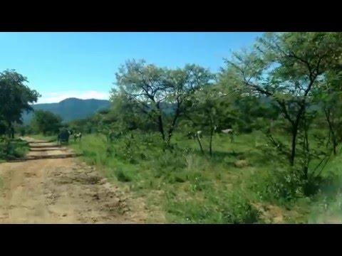 Zebras at Lake Kyle recreational park Masvingo  Zimbabwe. What to see in Masvingo Zimbabwe