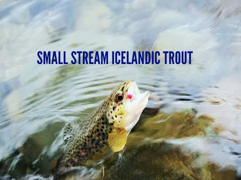 Small Stream Icelandic Trout: Euro Nymphing
