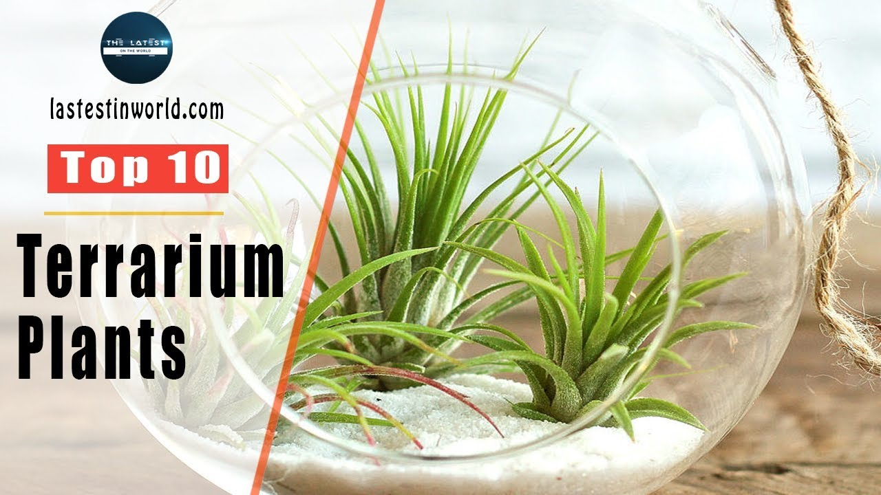 Top 10 Terrarium Plants Youtube