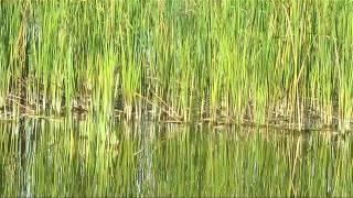 Рыбалка в Трубчевском районе Брянской области. Джиг. Осень, огромная щука