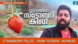 Strawberry Fields │ Farm Tourism │ Vattavada - Munnar - Kerala │ Route Records Ep#40