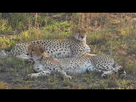VISIT TANZANIA - From the Savannah to the Ocean - SAFARI and