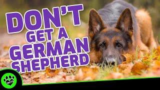 5 Reasons NOT To Get A German Shepherd  Dogs 101