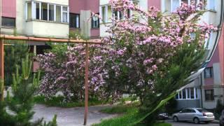 Продается 3 комн  квартира Светлогорск Сиреневый пер. 1(, 2016-04-23T19:40:37.000Z)