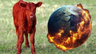 Birth Of Red Cow Fulfills APOCALYPSE Prophecy