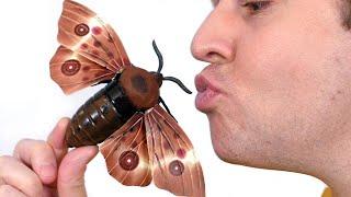 Kissing Giant Moth!
