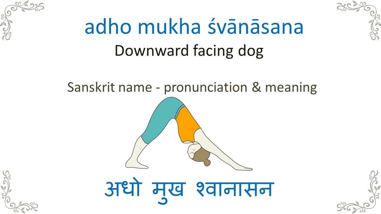 Three Legged Downward Facing Dog Pose Tri Pada Adho Mukha ...