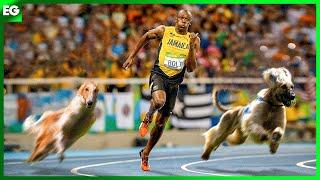 10 Fastest Dog Breeds  Viszla, Afghan Hound, Borzoi