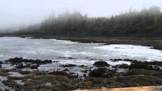 Gambar cover Black Bear on Botanical Beach, Port Renfrew BC Canada - May 18, 2015