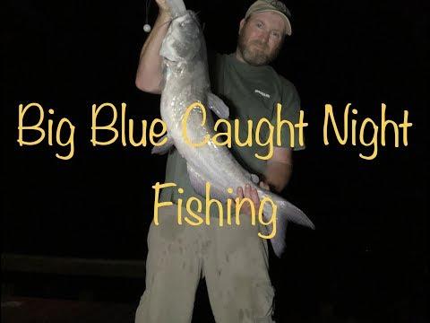 Big Bluecat Caught On Lake Livingston