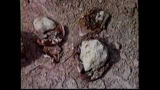 Ruins of Sodom and Gomorrah Found !
