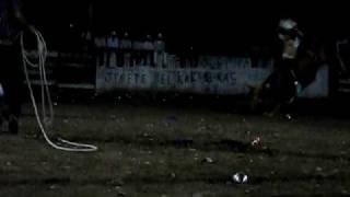 Toros el 25 de Diciembre en Arocha Nayarit (el paranal)