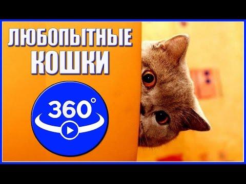 360 градусов -