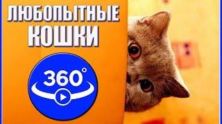 Любопытные кошки. Видео 360 градусов.