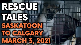 Rescue Tales - Fur-ever Homes Rescue March 2021, Saskatoon Rescue