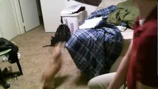 Dog Tries To Jump On Bed And Fails