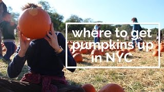 Where to Go Pumpkin Picking in NYC With No Car
