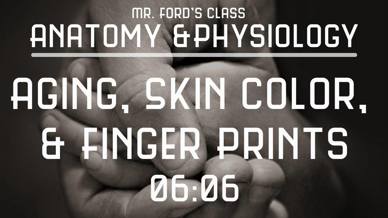 Integumentary System: Aging, Skin Color, & Finger Prints (06:06 ...