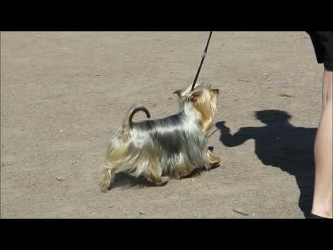 Питомники собак во Владимире список питомников фото
