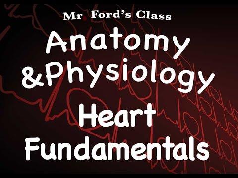Cardiovascular System : Heart Fundamentals (14:01)