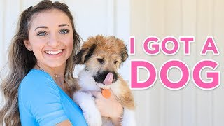 We GOT A DOG | Identical twins get a puppy!