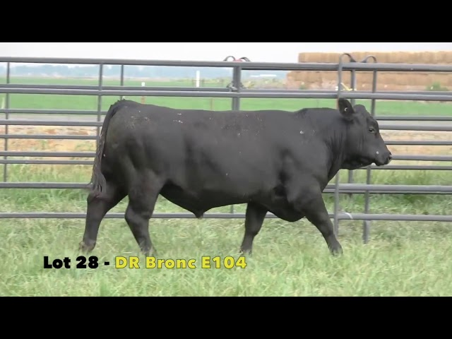 Black Gold Bull Sale Lot 28
