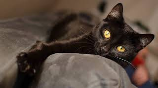 """Платок батик """"Черный кот""""."""