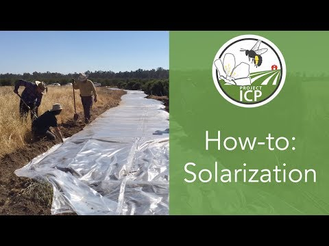 How To Use Solarization To Prepare Areas For Planting