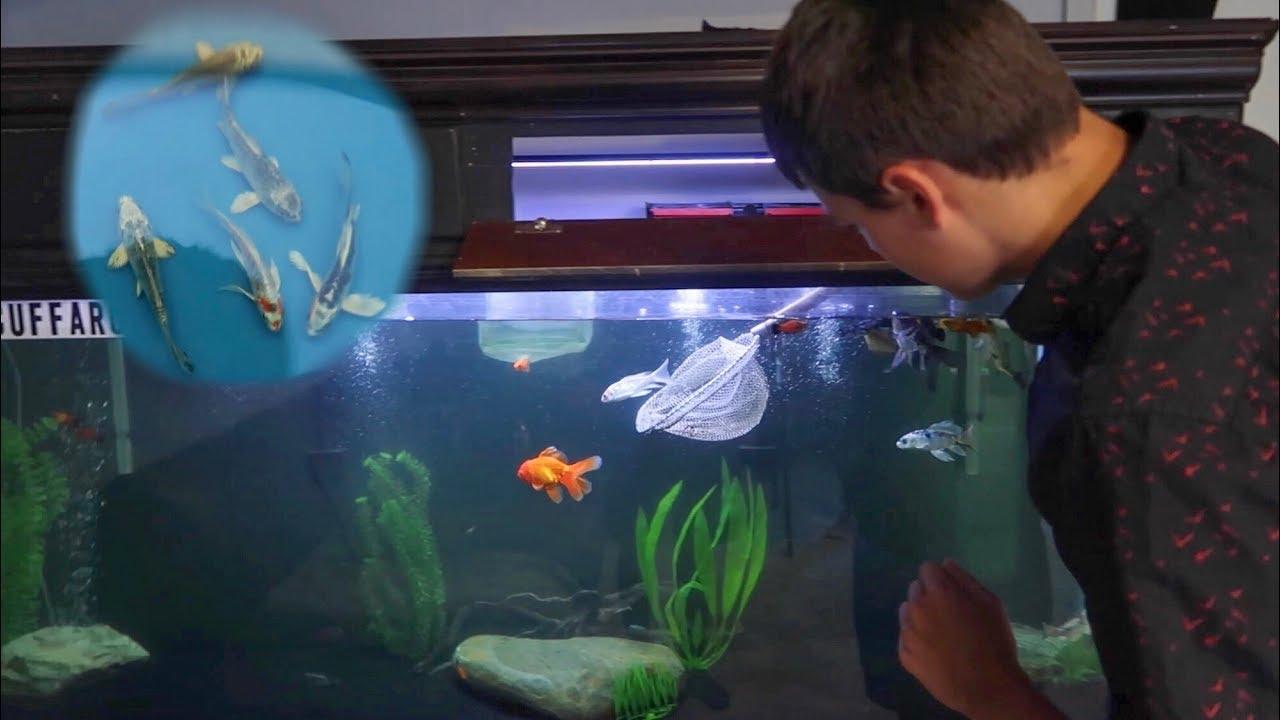 160-gallon-aquarium-fish-removal