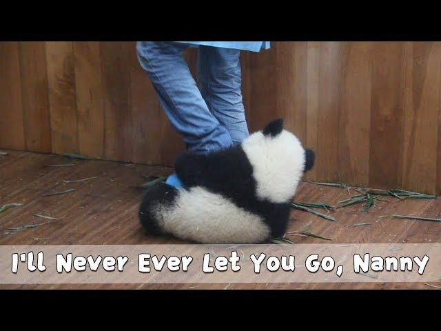 30 SecondsTo Get The Correct Posture Of Hugging Nanny's Legs | iPanda