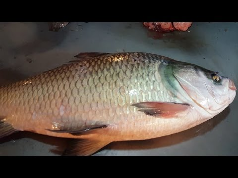 Fresh Indian Major Carp Fish Slice into Chunks in Karwan Bazar Dhaka Bangladesh
