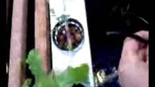 Free Diy Hydroponics Plans | Free Homemade Hydroponics