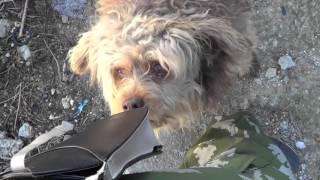 Встретили по дороге лохматую собаку