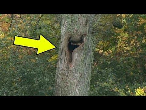 Он услышал страшные звуки, доносящиеся с дерева. Посмотрев что внутри, он не поверил своим глазам!