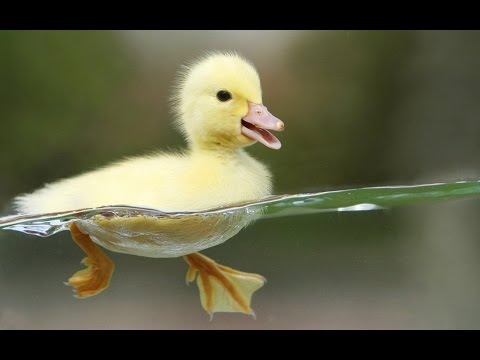 League of Quacks