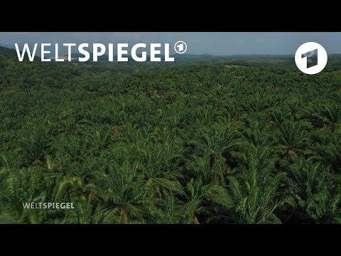 Malaysia: Palmölbauern Gegen Die EU | Weltspiegel