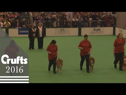 Obreedience Competition - Part 1 | Crufts 2016