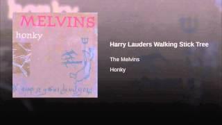 Harry Lauders Walking Stick Tree