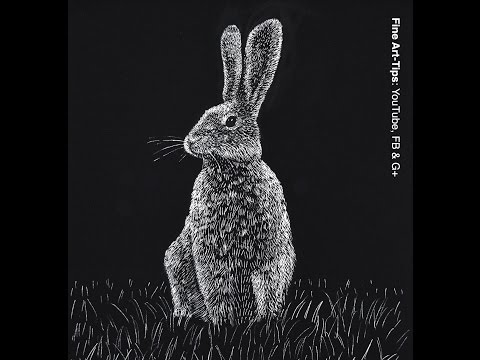 How to Draw a Hare - Rabbit - Scratchboard