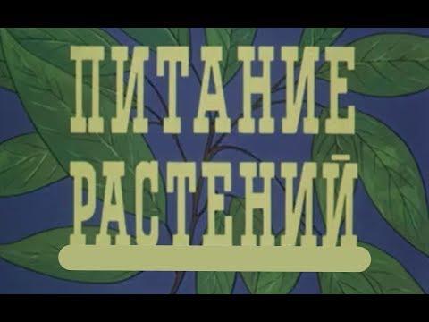 Питание растений мультфильм