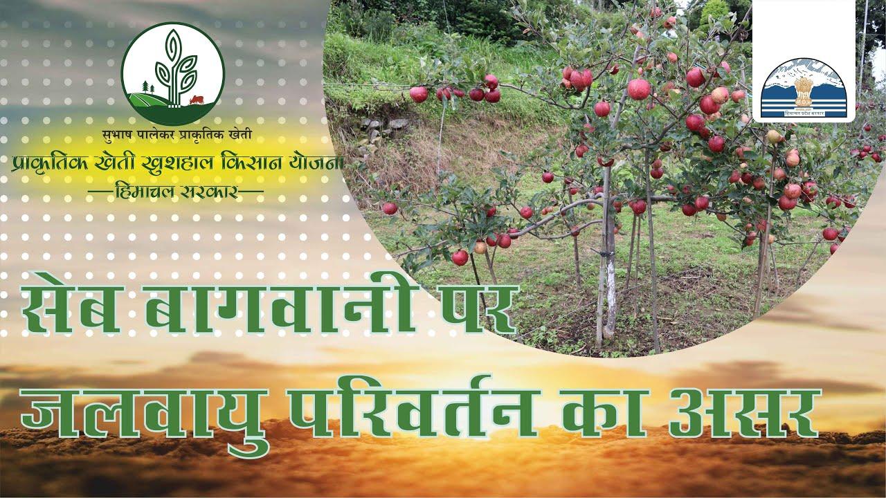 सेब बागवानी पर जलवायु परिवर्तन का असर | Subhash Palekar #NaturalFarming Himachal Pradesh |
