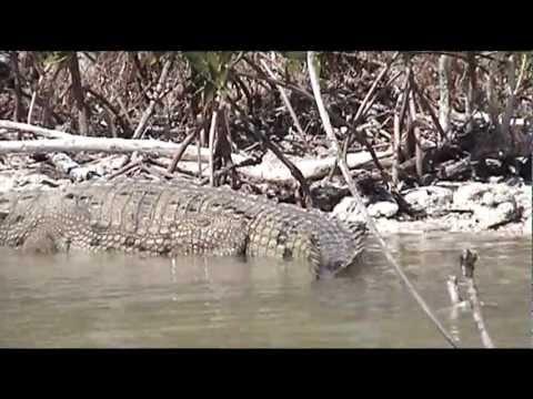 MEXICO YUCATAN - BIOSFERA RIO LAGARTOS  [HD]