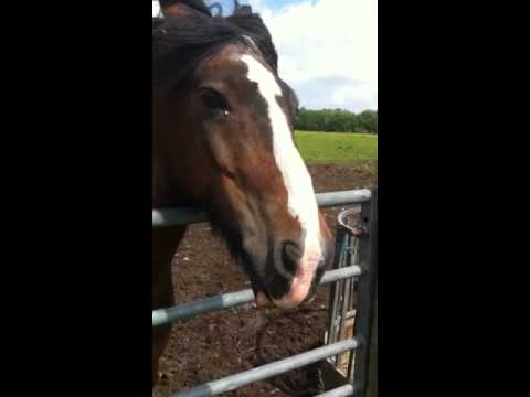 Talking Horse from Westhoughton